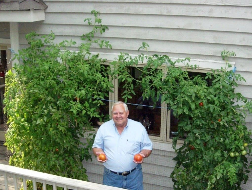 Ken Rice with tomatoes