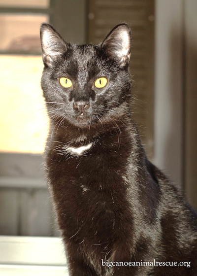 """BCAR Maggie""""s House – Elegant Prince Yogi yearns for a forever home"""