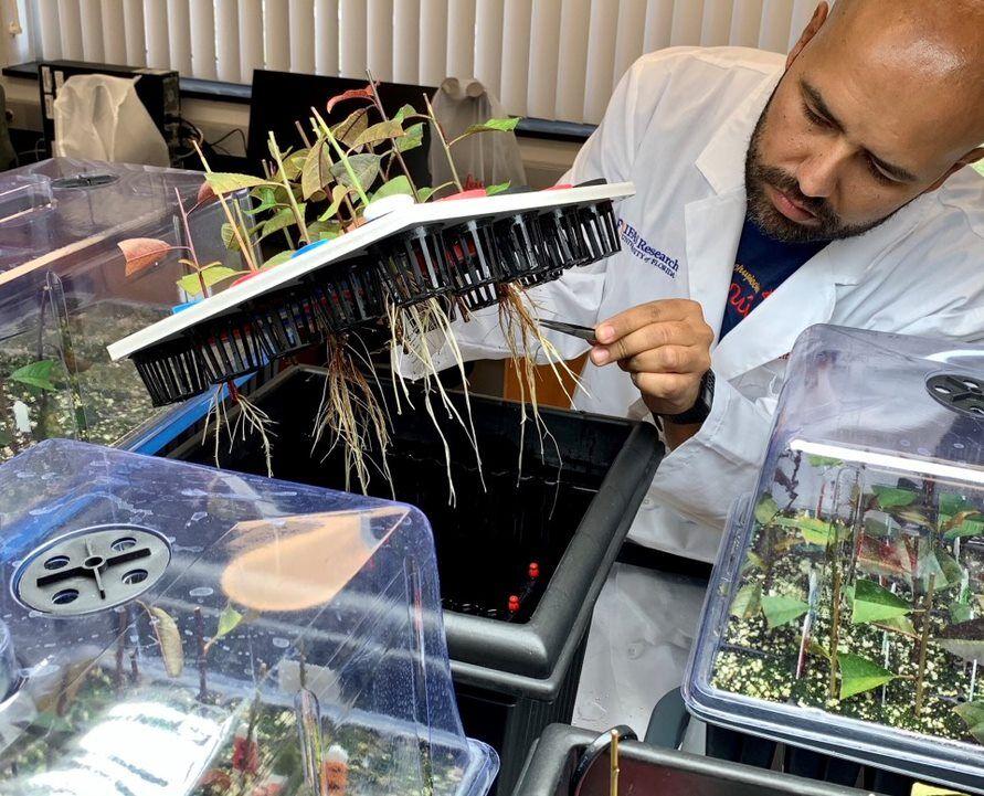 Ricardo Lesmes-Vesga examines aquaponics.