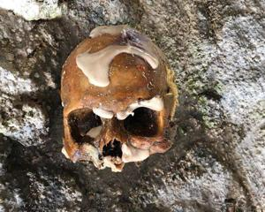 Human skull found by divers while loberstering in the waters off Card Sound Road.