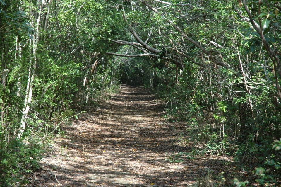 Elliott Trail BNP