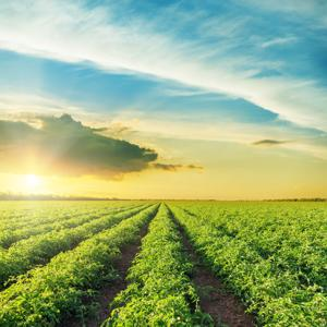 Farming is significant throughout South Dade