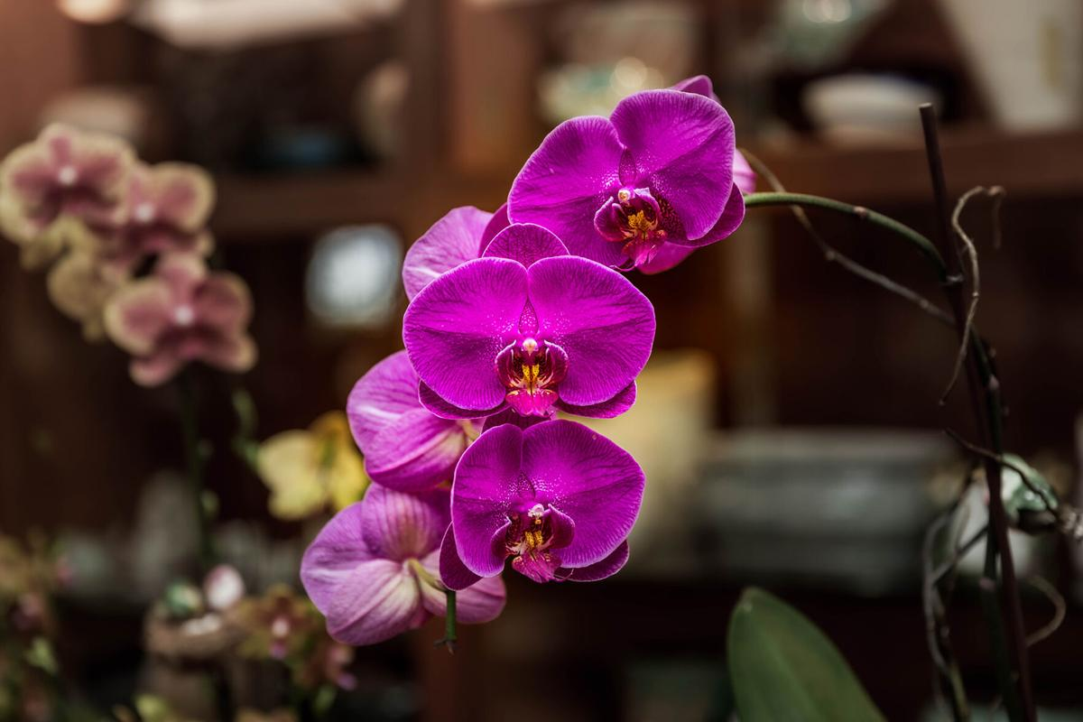 Experts in the East Everglades Orchid Society are happy to share their experiences.