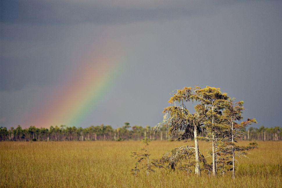 Prairie Rainbows