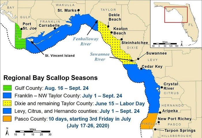 Regional Bay Scallop Seasons