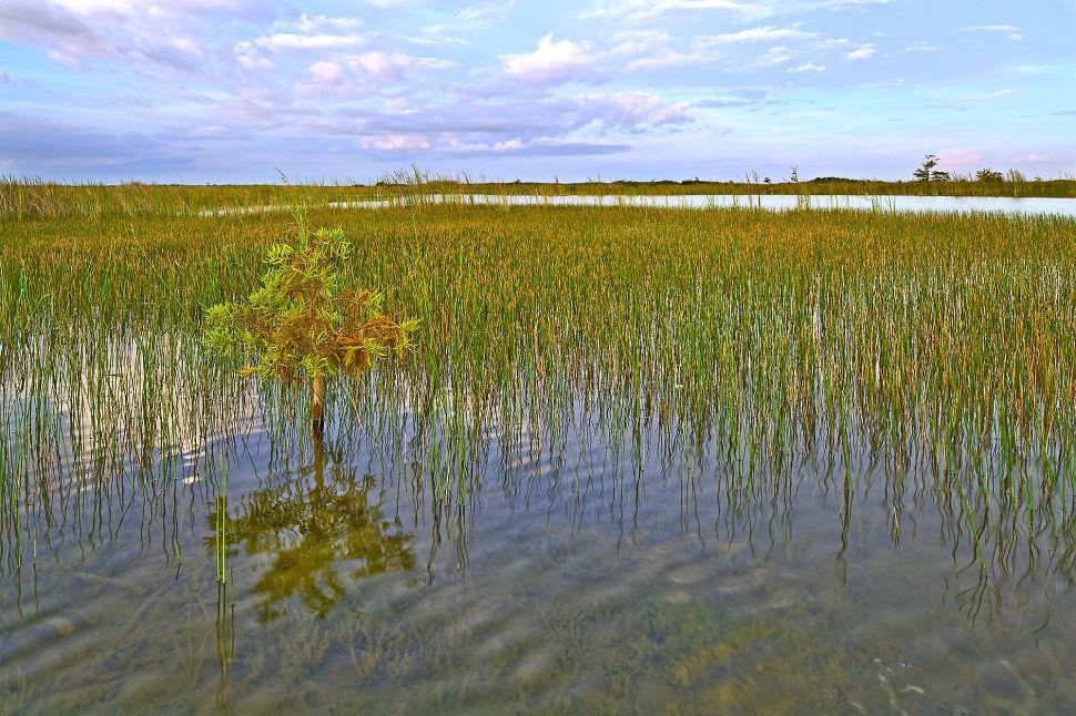Fresh Water Marl Prairie ENP