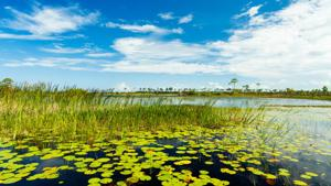 A fantastic morning at Everglades National Park
