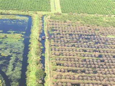 Crops along the east coast of Florida may see flooding and damage.  This photo shows damage from Hurricane Irma in 2017.