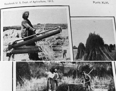 Hemp Farming 1913