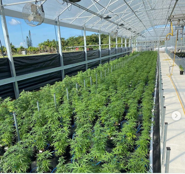 from South Tips  website: If you were a hemp plant, then you would be very happy to grow up in one of our Greenhouses at South Tip 😃 We treat our young plants - and in fact all of our hemp plants - with a great deal of care and attention. The intent, with nature's goodwill, is for our hemp plants to become very healthy and happy like the South Tip plants in the above pics. We have the utmost  respect for nature at South Tip and we do our level best to express it through our hemp cultivation work everyday.