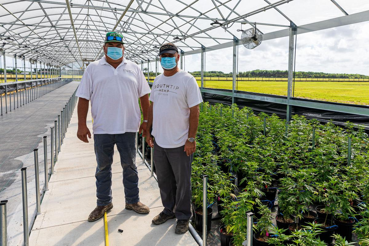 Sal Finocchario and Leo Talario stand next to hemp plants ready to be transplanted into the outside fields.