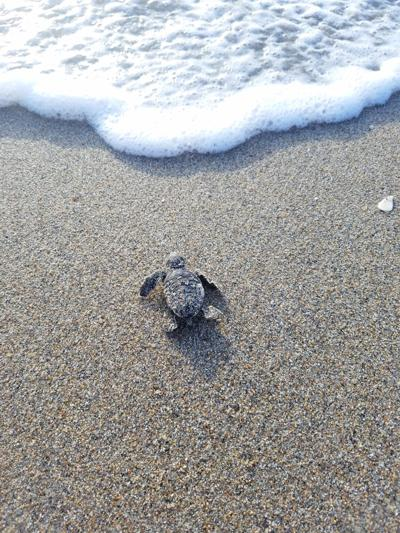 Help baby sea turtles find their way to the sea.