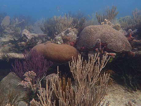 The Florida Coral Crew was launched in July, and already has 20,000 members.