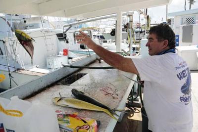 Charter fishing boat captain Glen Miller cleans freshly caught mahi-mahi at Bud N' Mary's marina in Islamorada, in the Florida Keys.