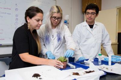 Romina Gazis works with her lab to identify plant samples that have been  diagnosed as diseased.  Photo: UF/IFAS