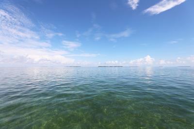 Clear water was the norm in the historic Florida Bay and is necessary for healthy seagrass, which  is the foundation of its ecosystem. Without enough freshwater raining onto or flowing into the bay, salinity levels rise eventually leading to hypersalinity events, algal blooms and cloudy water.