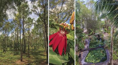 Restoring native plants and habitat is a goal for some gardeners