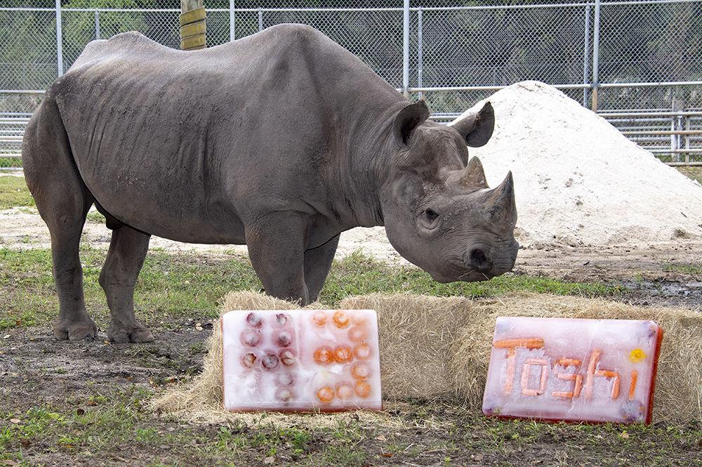 Toshi enjoys his icee birthday treats.