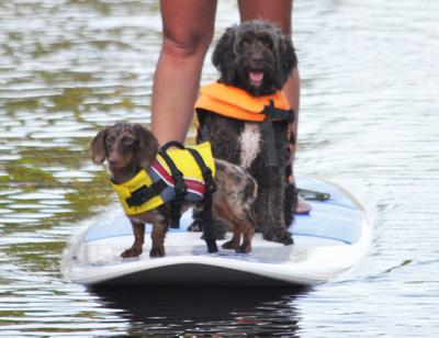 Norman and Maggie love to paddleboard in Key Largo.