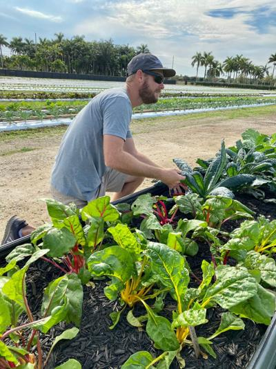 David Torcise works around the raised beds filled with beautiful organic leafy greens.
