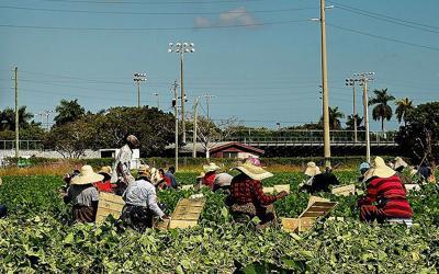 Harvesting a crop in Homestead