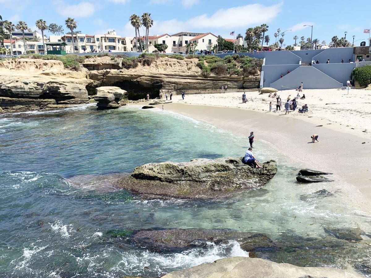 La Jolla Beach with sunbathers and wildlife.