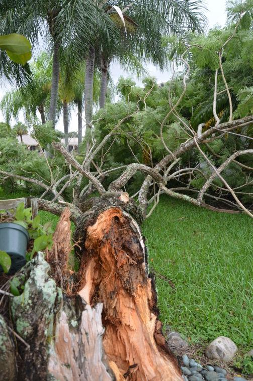TS Isaac Downed Tree