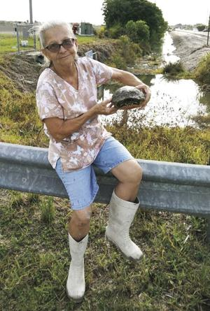 Eileen Chea Harran, is the Turtle Lady, saving the turtles along the construction of 320th street.