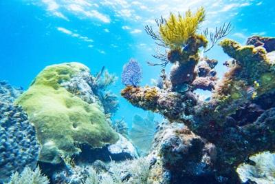 John Pennekamp Coral Reef State Park.