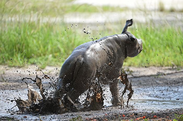 Aria Playing in Mud