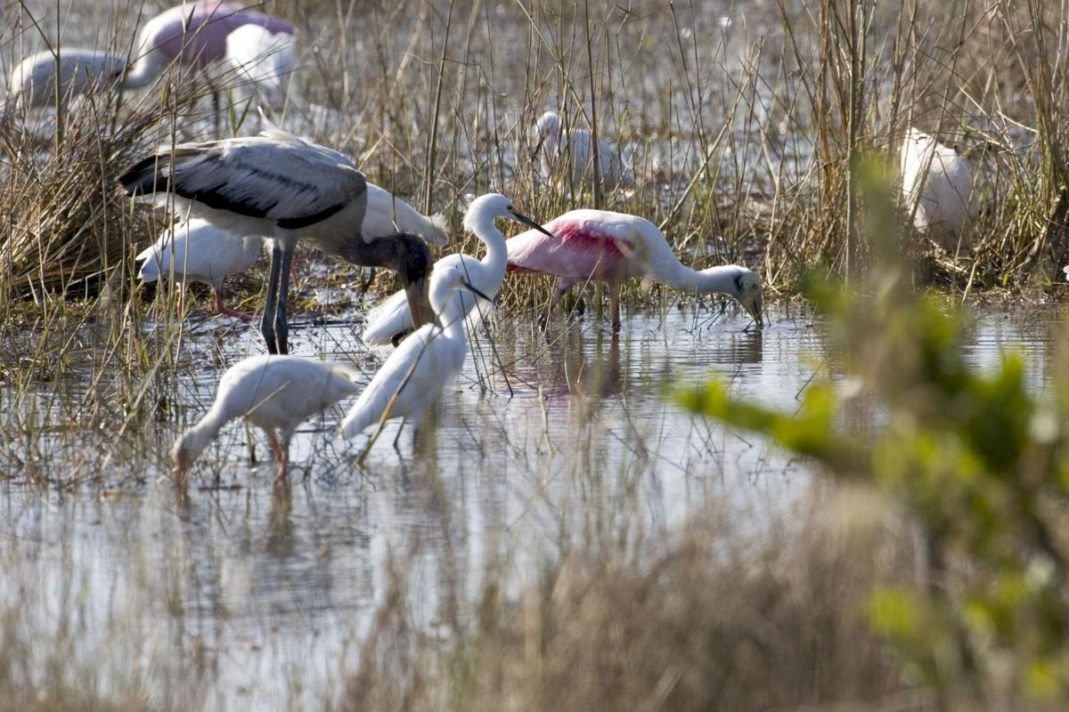 Bird Populations in the Everglades