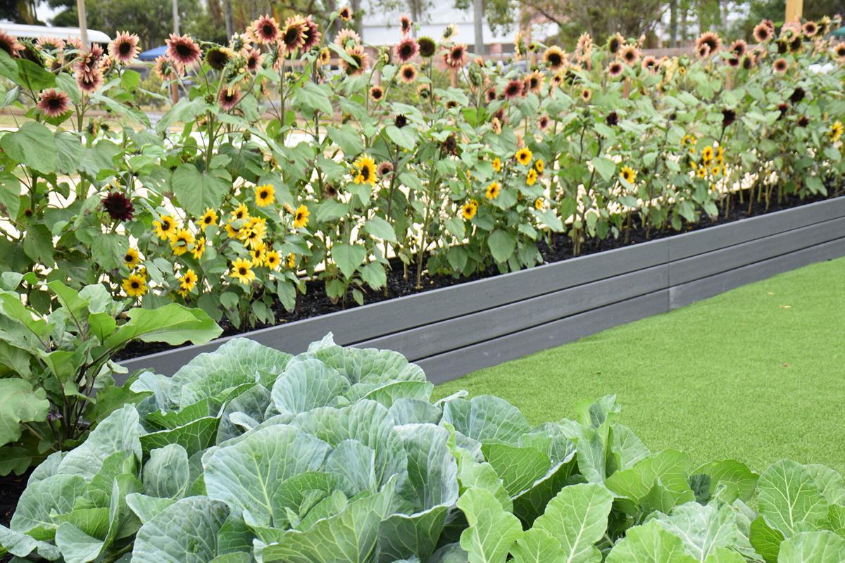 Raised beds with flowers and vegetables, and rows of of produce.
