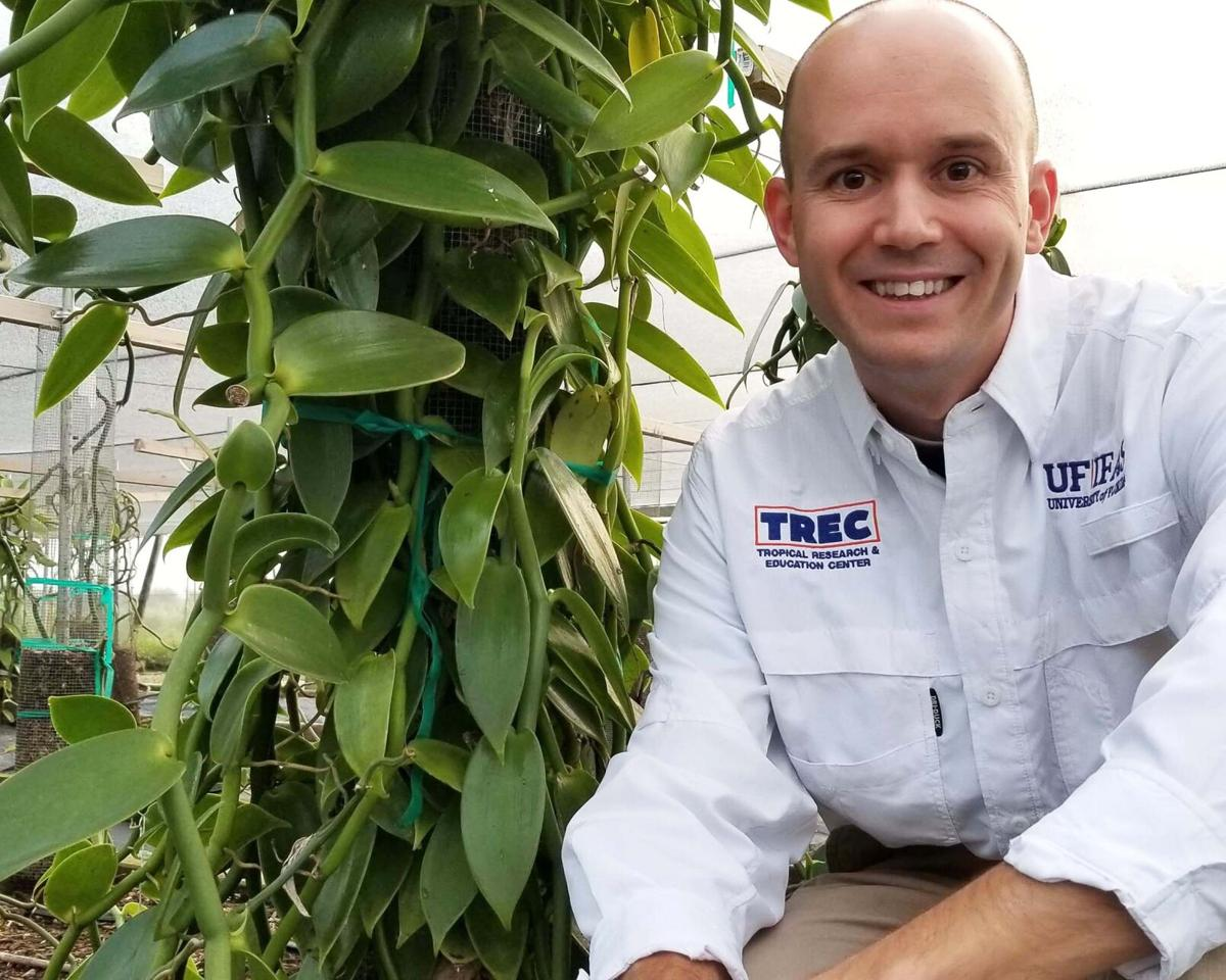 """Alan Chambers, tropical plant geneticist at UF/IFAS Tropical  Research and Education Center, co-led the generation of a """"chromosome-scale""""  sequencing of Vanilla DNA."""