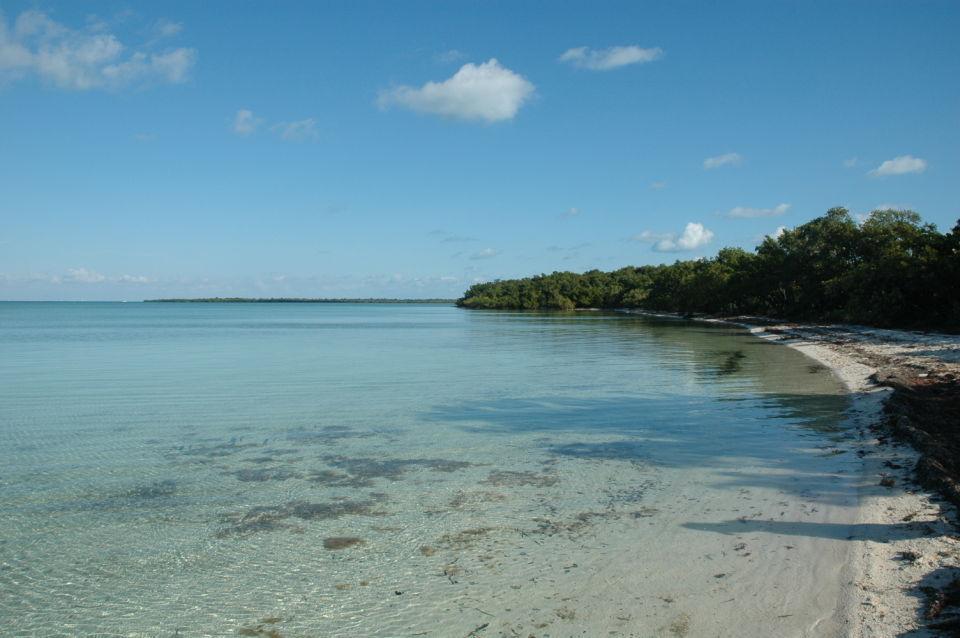 Elliott Key Shoreline