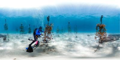 Florida Keys National Marine Sanctuary Superintendent Sarah Fangman will present on Jan. 8 at  Keys History & Discovery Center.