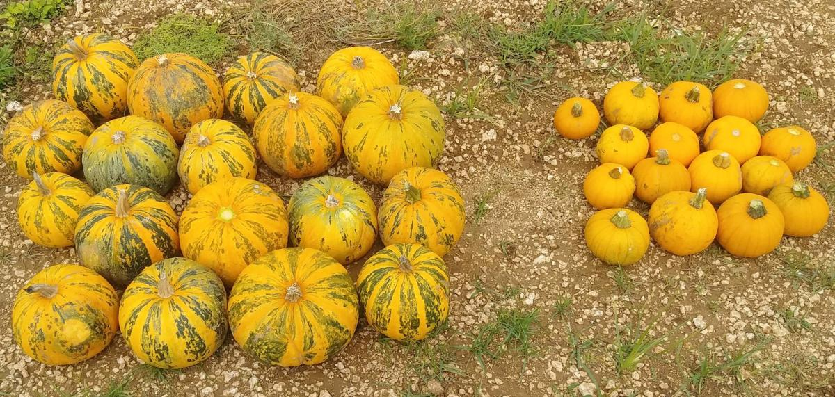 A varietal multitude