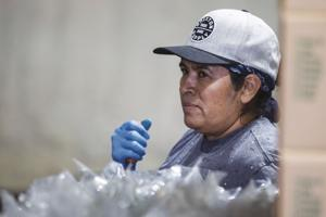 Caterina Sanchez, works in S & L Farms packing house.