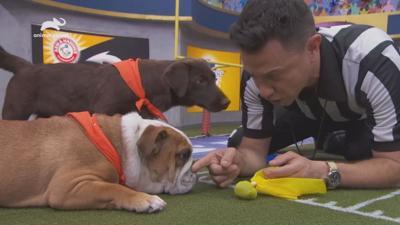 Miami-Dade Animal Services to host Puppy Bowl XVI