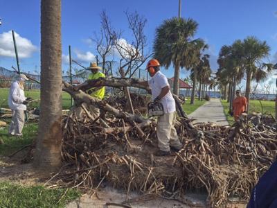 Hurricane Vegetation Debris Cleaning.