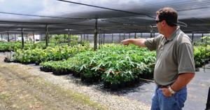 Dade County Farm Bureau President Eric Tietig at his Pine Island Nursery