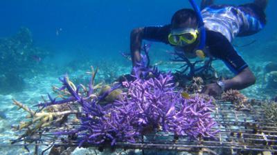 Coral Farming