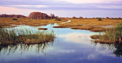 """Everglades """"River of Grass"""""""