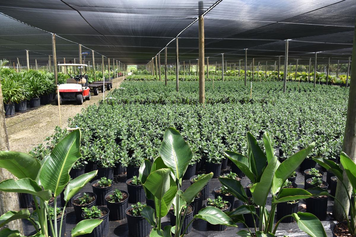 An abundance of spring nursery plantings at the Doug Ingram & Sons LLC West Farm on 288th St.