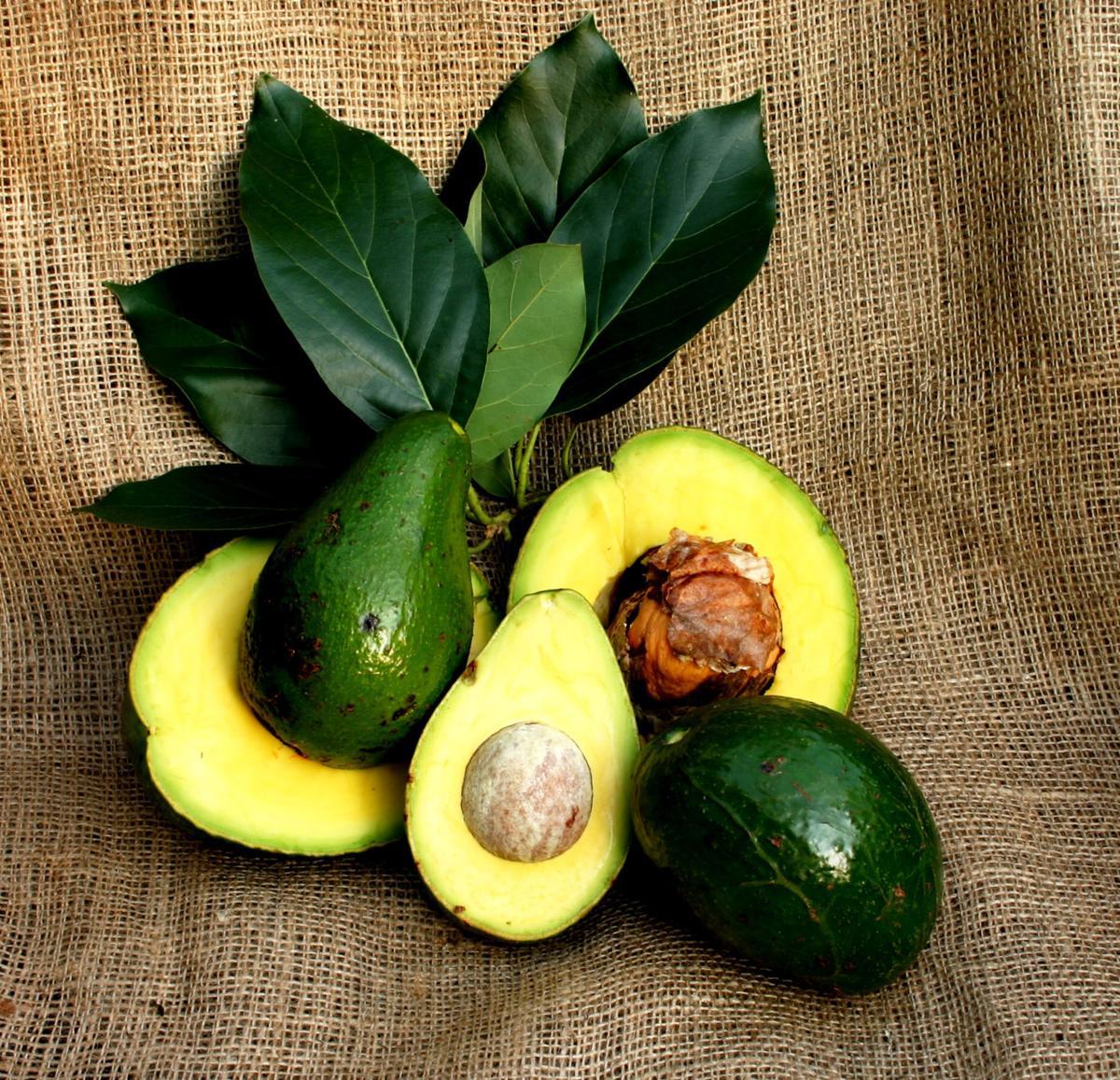 September's featured fruit - Avocado (Persea Americana)