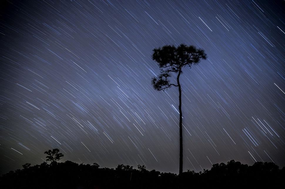 Mahogany Hammock Star Trails