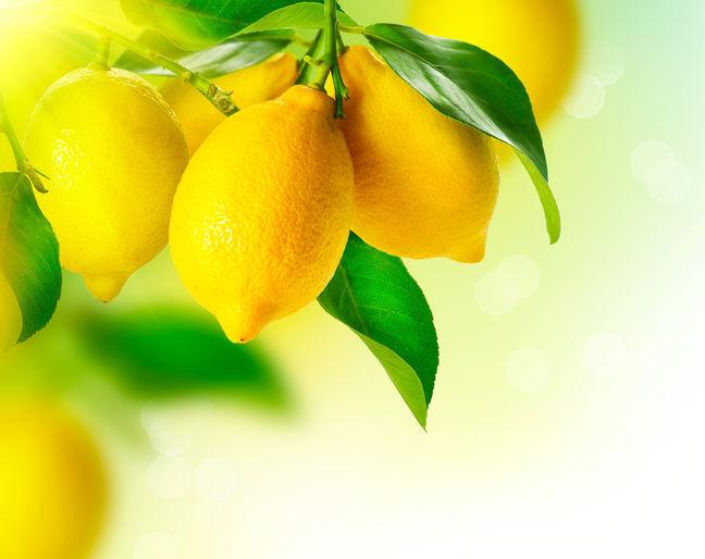 Lemons for Spring