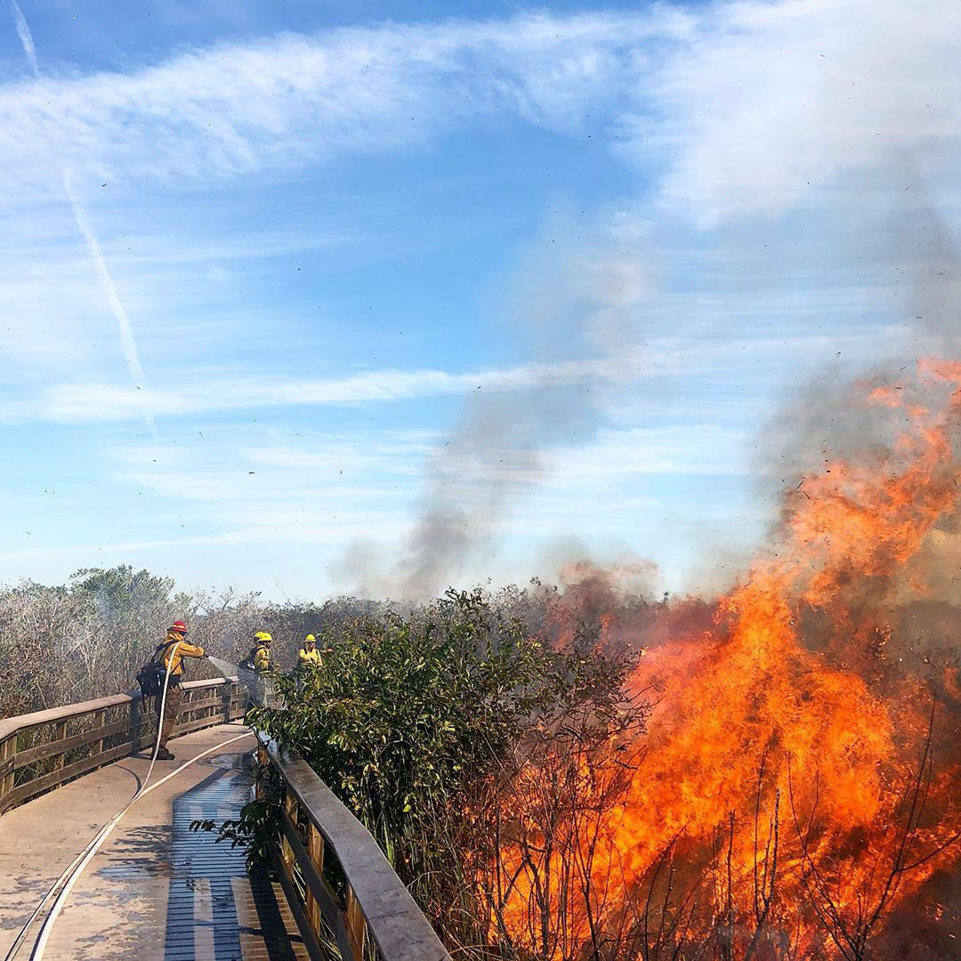 During (above) the Royal Palm fire. Fire crews used drip torches to light the prescribed, or planned, fire. Prescribed fire is used to clear vegetation to lessen the chance of wildfire.