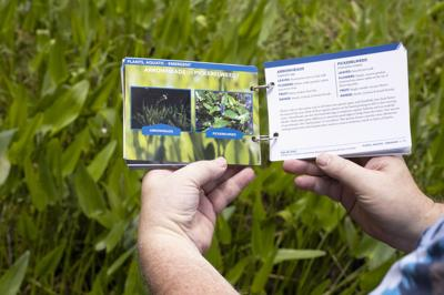 New Pocket Guide Helps ID Commonly Confused Animals, Plants