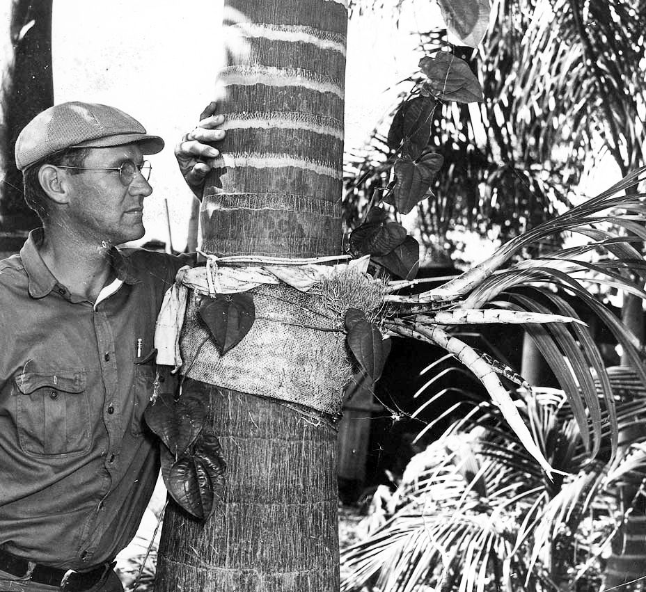 Fred Fuchs Sr. with an orchid in 1939.
