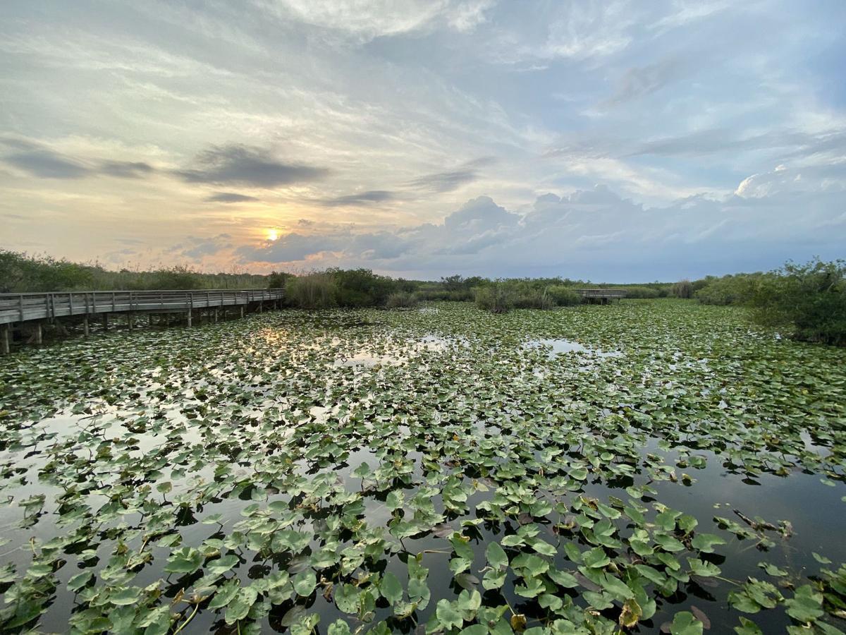 Anhinga Trail at Everglades National Park.